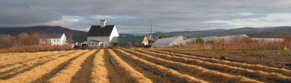 Surowiec Farm