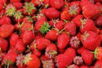 strawberries-berries-fruit-freshness-46174-medium