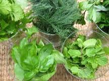 basil, dill, parsley